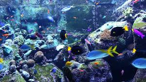 3 hours of beautiful coral reef fish relaxing ocean fish 3 hours of beautiful coral reef fish relaxing ocean fish aquarium fish tank relax music 1080p hd youtube