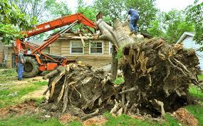 top 10 best san jose ca tree services angie s list