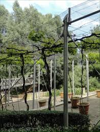 hd photos of jardin de la treille vineyard inside parc de la villette