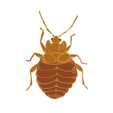 Living With Bed Bugs New Law Pinpoints Bed Bug Responsibility In Nh Colonial Pest Control
