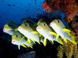 desktop hd wallpapers top 27 sea animals wallpapers in hd
