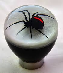 the 25 best redback spider ideas on pinterest black widow
