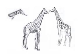 animal drawings and sketches faezghani