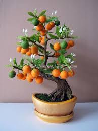 59 best fruit bearing bonsai world images on bonsai