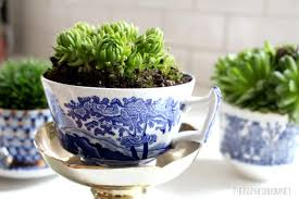 Easy To Care For Indoor Plants Advice Tips Archives Garden Trick