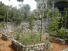 vegetable gardening tropical style la gringa u0027s blogicito