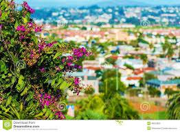 san diego flowers san diego flowers stock image image of gardening houses 48912803