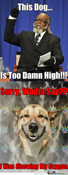 High Dog Meme - damn dog memes best collection of funny damn dog pictures