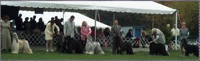 afghan hound national dog show ahca afghan hound club of america national specialty show 1999