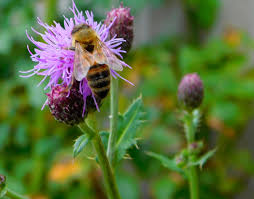 study identifies ornamental plants with potential to benefit bees