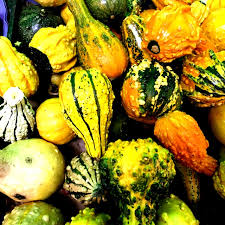 ornamental gourds information and facts