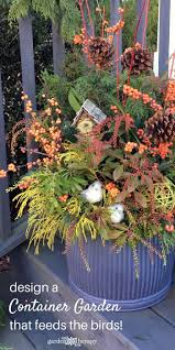 design a beautiful bird friendly winter container foraged from