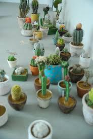 140 best cactus images on pinterest plants cactus plants and