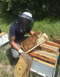 kelley u0027s beekeepers rush in preparation for hurricane irma