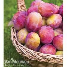 Online Fruit Trees For Sale - cheap stone fruit trees for sale online buy a stone fruit tree