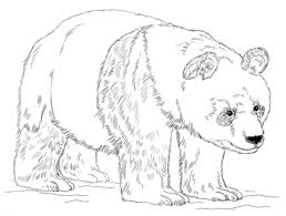 giant panda bear coloring free printable coloring pages