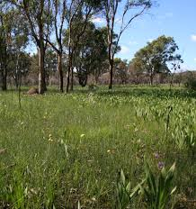native plants western australia plant communities of seasonal clay based wetlands of south west