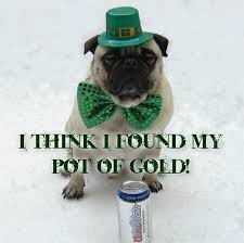 Funny St Patricks Day Meme - funny pictures images funny st patrick s day pug dog meme