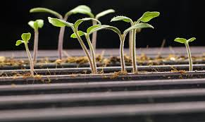 planting the seeds of innovation native plants gardening app what every home vegetable gardener needs to know about gmo seeds