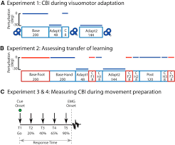 cerebellar u2013m1 connectivity changes associated with motor learning