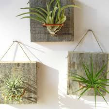 40 best ideas for displaying air plants in house home123