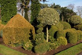 Real Topiary Trees For Sale - 53 stunning topiary trees gardens plants and other shapes