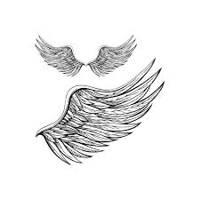 Wing Tattoos On - 17 best wing images on wings drawing wing