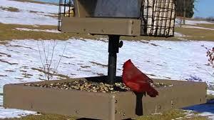wild bird house red bellied woodpecker cardinal chickadee