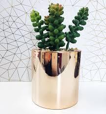 desk cactus things to brighten up your desk megan bellis pulse linkedin