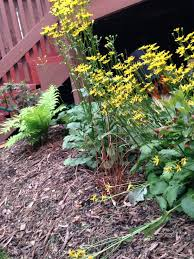 native plants maryland five ways to ring in spring with cleaner water university of