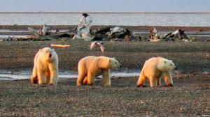 scientists decry arctic oil expansion in letter to us senators