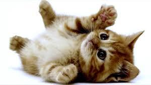 top 10 los gatitos mas bonitos top 10 most beautiful kittens