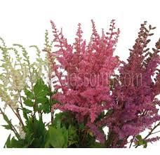 Flowers For Sale Buy Astilbe Flower Astilbe Flowers For Sale