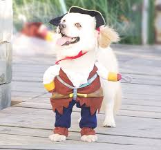 small halloween gifts amazon com nacoco pet dog costume pirates of the caribbean style