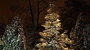 troubleshooting tree light pre lit rainforest islands