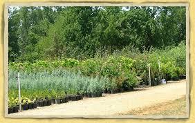 Landscape Nurseries Near Me by Landscape Plant Nursery Garden Center