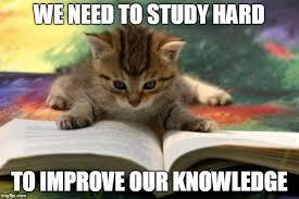 Reading Meme - kitten reading meme generator imgflip