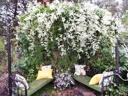 gardening in central oregon flowering vines