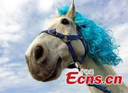 hairstyles for horses horses get prepared for racing with fashion hairstyles 6 6