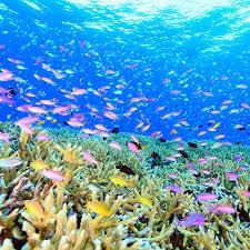 snorkeling images Papua new guinea snorkeling tufi dive resort jpg