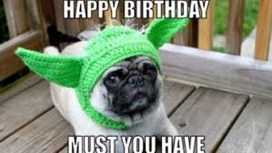 Birthday Pug Meme - 10 happy birthday memes that will have you rolling on the floor