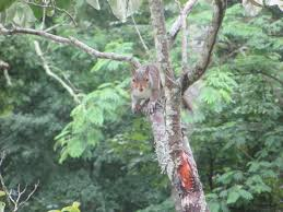 North Carolina wildlife images Photos north carolina wildlife jpg