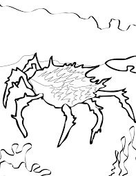 spiny king crab coloring page handipoints