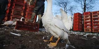 chambre agriculture du tarn crise aviaire en lot et garonne la chambre d agriculture porte