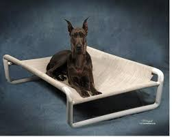 extra large dog beds rover company