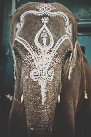 best 25 elephant ideas on picture of an elephant