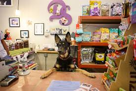 pet stores in chicago for dog leashes cat collars and more