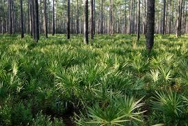 Florida forest images Florida forests national forest foundation jpg