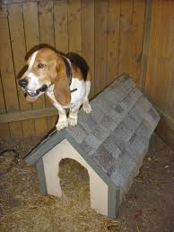 dog houses 101 how to choose the best dog house or build your