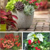 diy outdoor making porch plants for summer u2013 julia palosini